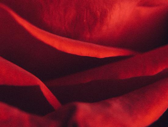 Le più belle poesie d'amore da leggere e rileggere