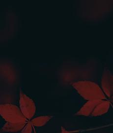 L'autunno e le sue gioie